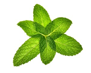 six mint leaves in pattern over white