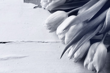 Beautiful tulips on wooden background in black and white