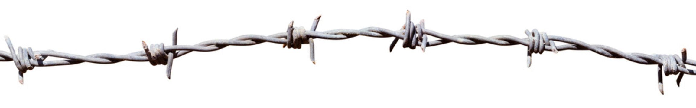 fil de fer barbelé sur fond blanc