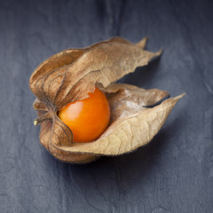 An open calyx, exposing the ripe fruit of physalis peruviana on