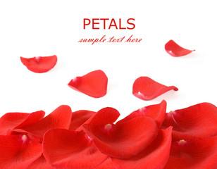 Red velvet rose petals isolated on white