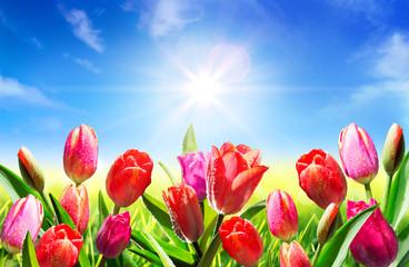blooming in springtime