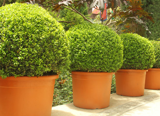 small trees in pots