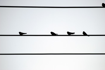 silhouette of 5 birds on a wire