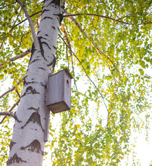 birdhouse attached to the trunk of a birch