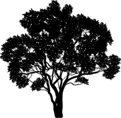 black tree with curved branches