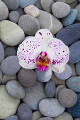 white orchid and gray stones