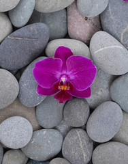Beautiful pink orchid and gray stones background