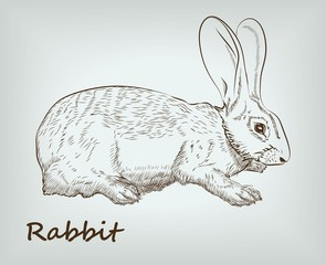 rabbit. farm animals. vector sketches.