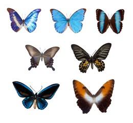 Set Tropische Schmetterlinge (Foto)