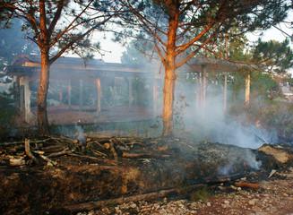 burn dry grass, forest fire