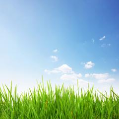 Sommer Gras