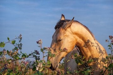horse in a field grazing.