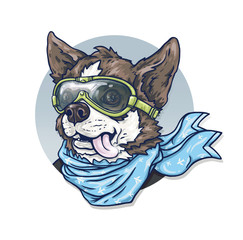 Dog-pilot in glasses and a scarf. Chihuahua