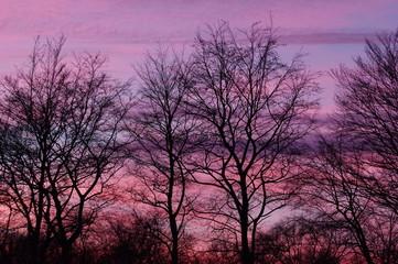 Pinkfarbener Sonnenuntergang mit Bäumen 4