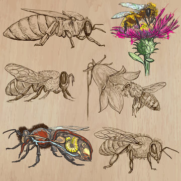 bees, beekeeping and honey - hand drawn vector pack 2