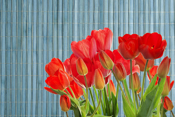 Beautiful garden fresh red tulips on wooden  background