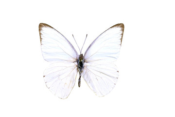 colorful butterfly isolated on white