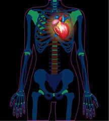 Vector x ray heart banner illustration