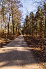 In the Hahnheide near Trittau