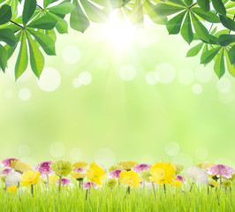 beauty green leaf and flower on grass spring season background