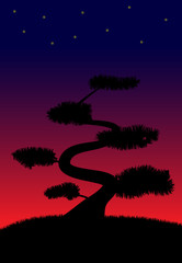 Bonsai tree silhouette with sunset