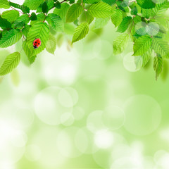 Nature background with green leaves