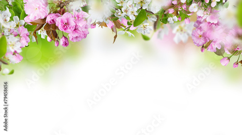 Beautiful spring blossoms background