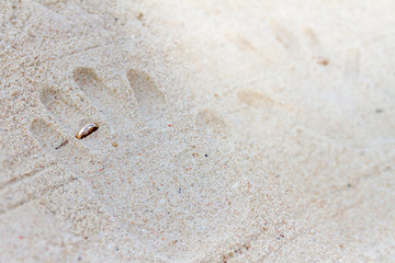 hand prints with wedding rings on tropical sand beach
