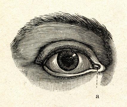 H40an eye
