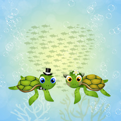 funny sea turtles in love