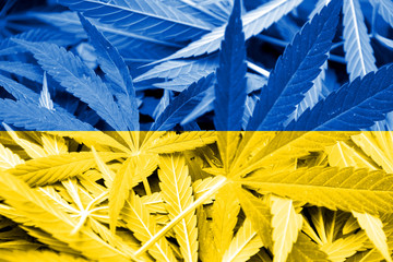 Ukraine Flag on cannabis background. Drug policy.