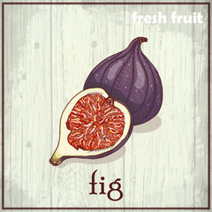 Hand drawing illustration of fig
