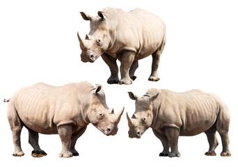 Set of Three Rhinoceros Isolated on a White Background.