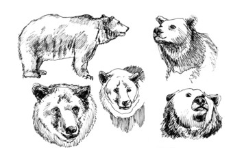 hand-drawn illustration of a bear in the different corners