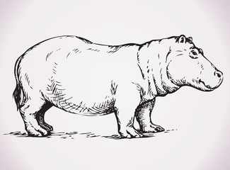 Big hippopotamus. Vector drawing