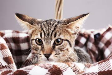 Kitten rest in plaid, closeup