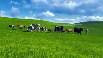 Wall Mural - Herd of cows on a pasture