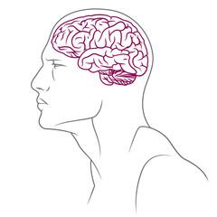 brain line male