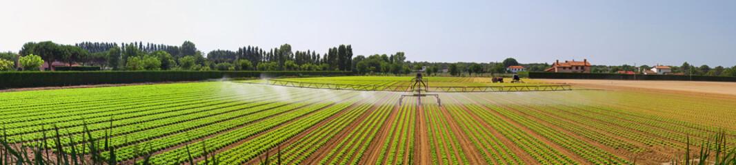 Panoramic irrigation field
