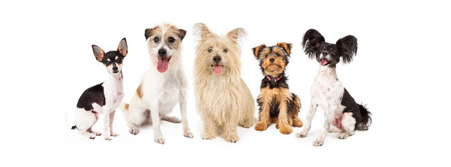 Common Small Breed Dogs