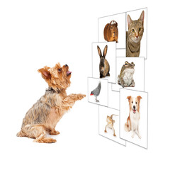 Dog Scrolling Pet Photo Wall
