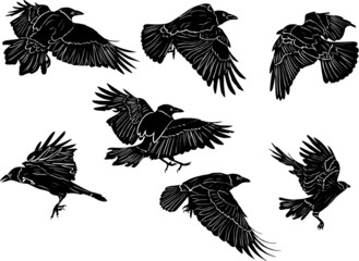 set of seven black isolated crows sketches