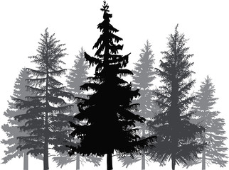 fir trees forest isolated on white