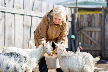 woman feeding little goats from