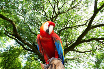 parrots macaw in the forest