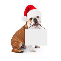 Fototapete - Christmas Santa Bulldog Holding Blank Sign