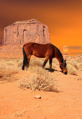 Wall Mural - Horse Monument Valley