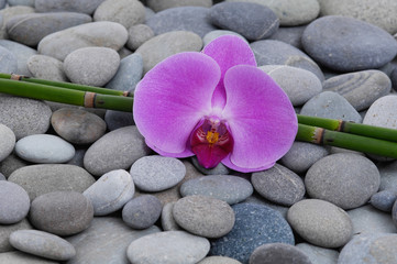 Pink orchid and bamboo grove on stones
