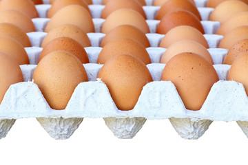 Chicken brown egg closeup view background
